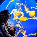 Sea Dragons: Night at the Georgia Aquarium