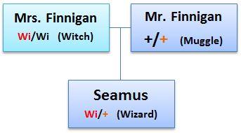 HPGenetics_Seamus